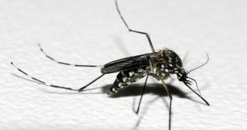 Uma morte por dengue está em investigação em Uberaba