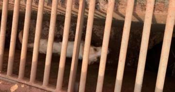 Cachorro é resgatado por bombeiros após ficar preso em bueiro em Uberlândia